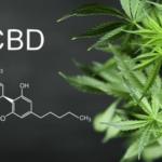 Comment fonctionne le métabolisme de CBD?