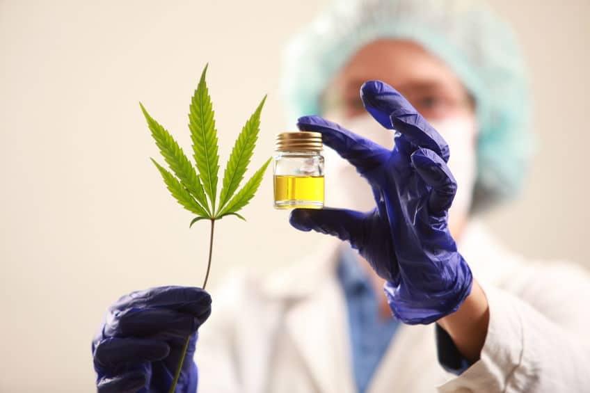 Guide sur l'huile de cannabis bho